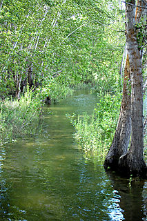 Nature walk swamp1
