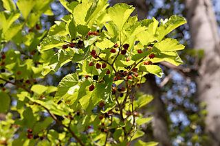 Nature walk berries1