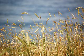 Nature walk grass1