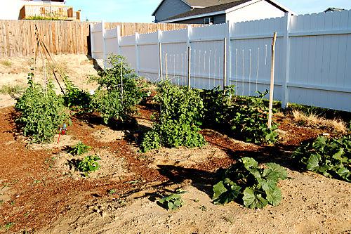 Garden in July 081