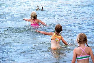 Lake chelan chasing ducks1