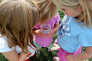 Homeschooling bug cup01