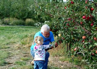 Picking apples tim and laurel01