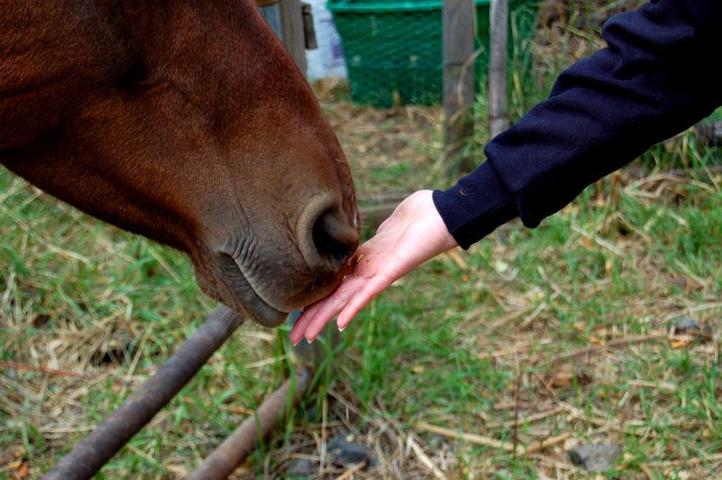 Picking applesjen feeding horse01