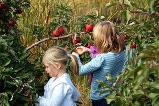 Picking apples01