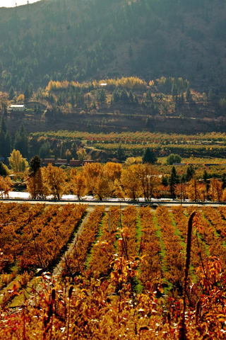 Fallish valley01