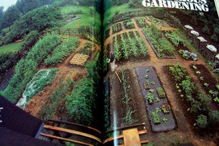 Garden planning victory garden2009-02-19