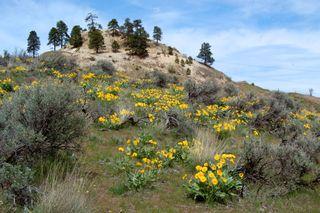 Saddlerock yellow wildflowers2009-04-18