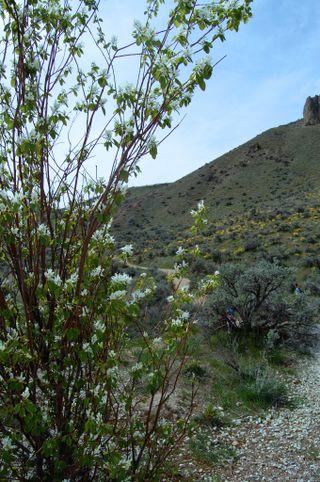 Saddlerock flora and fawna2009-04-18