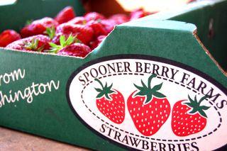 Strawberries for jam2009-06-19