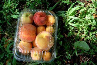 Peaches on the ground2009-07-24