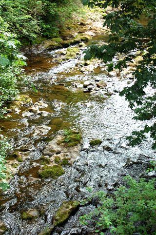 Creek2009-06-15