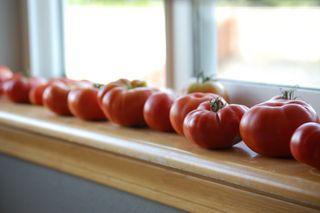 Tomatoes on window2009-08-09