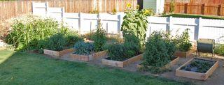 Garden from the deck 092009-08-20