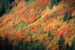 Stevens pass fall colors2009-10-08