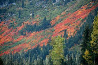 Stevens pass mountain side2009-10-08