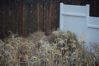 Snow in back yard2009-10-13