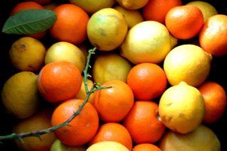 Citrus fresh from AZ2009-12-14