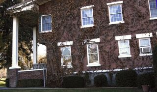 Warm springs ivy wall