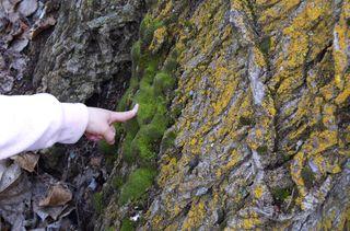 Touching moss
