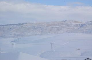 Snowy wheat field