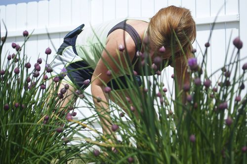 Through the chives