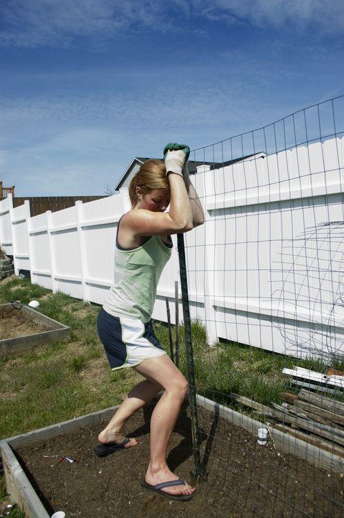 Cucumber fence 2