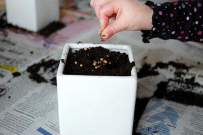 Planting_seeds1