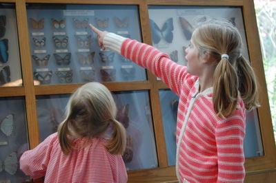 Butterfly_exhibit1